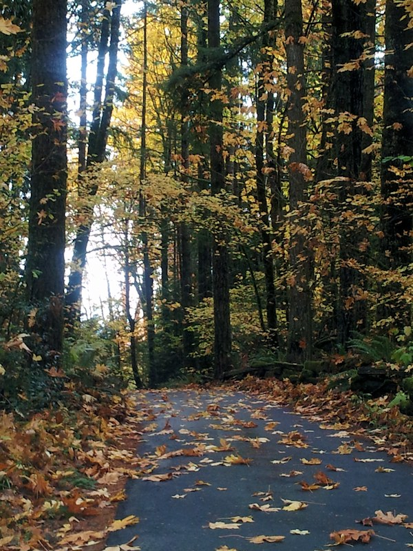 Fall Leaves on Road with tall trees in fall colors - photography by Lorelle VanFossen.