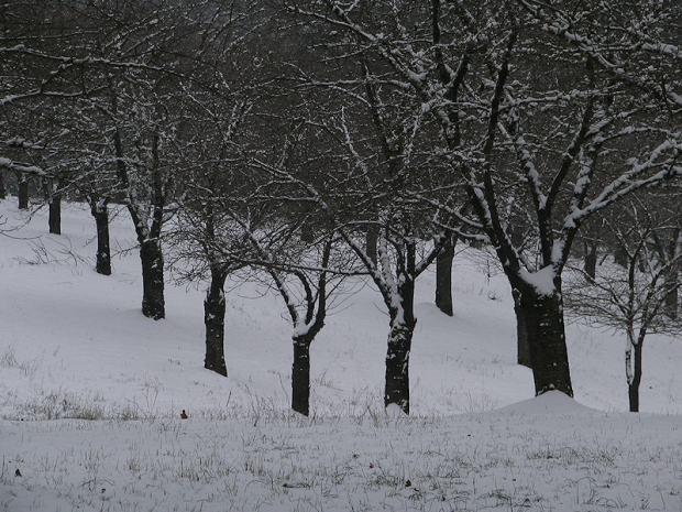Cherry Tress in Winter - photography by Brent VanFossen.